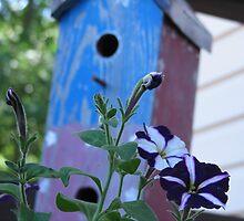 Petunias and the Birdhouse by PicsbyJody
