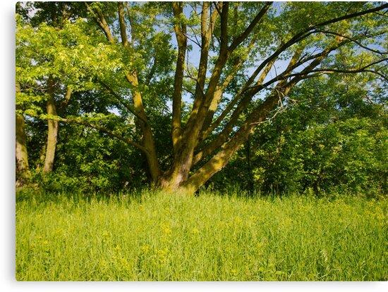 Green Tree by Scott Hendricks