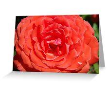 Big Rose Greeting Card