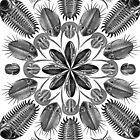Trilobites and Fossils in Black and White (Aspidonia) by RedPine