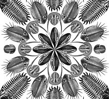 Trilobite Mandala (Collage using art by Ernst Haeckel) by RedPine