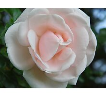 Simple Rose Photographic Print