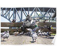 Pigeon Flock Poster