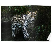 jungle-cat Poster