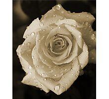 Sepia Rosa Photographic Print