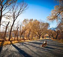 : In Lone Pine, One Corgi : by kmkmonkay