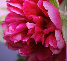 The Pink Peony by walstraasart