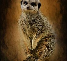 Meerkat sentry by Mark Bunning