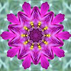 My Purple Flower by aprilann