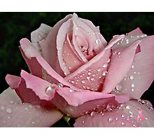 """Rainy Day Rose of Love"" Photographic Print"