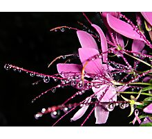 """Jeweled Raindrops Of Hope"" Photographic Print"