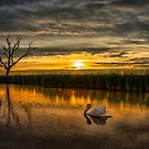 Is this evening? by THHoang