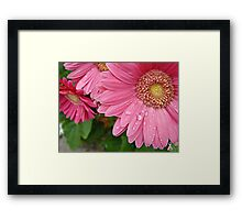 """Pink Daisy Of Hope"" Framed Print"