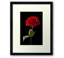 Single Red Dahlia Flower Wall Art Framed Print