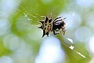 Jewelled Spider At Lunch by ©Dawne M. Dunton