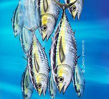 Yellowfin Tuna by David Pearce