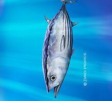 Striped Tuna by David Pearce