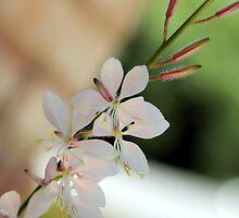 Floral White by BlackTopaz