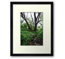 Grandfather Willow Framed Print