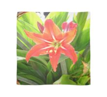Orange Amaryllis Flower Blooms in Springtime Scarf