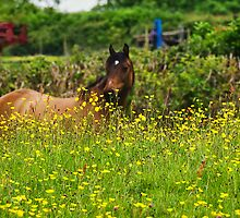Lost In Buttercups by Susie Peek