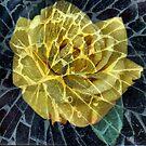 broken rose by sparkleshine