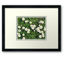 Consetellations of Daisies Framed Print