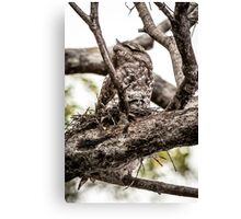 Papuan Frogmouth - Mum & Chick IV Canvas Print