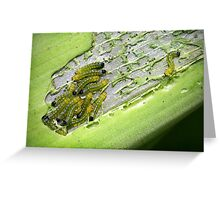The Hungry Little Caterpillars Greeting Card
