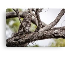 Papuan Frogmouth - Mum & Chick I Canvas Print