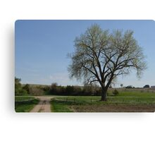 My Cottonwood Canvas Print