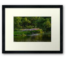 Pseudo Phlox Along The River's Edge  Framed Print