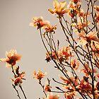Flowers. by Lindsay Osborne