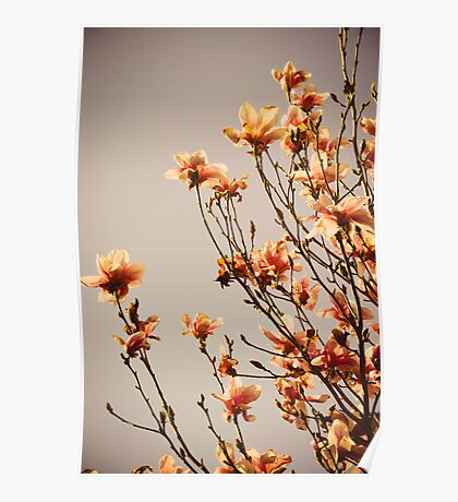 Flowers. Poster