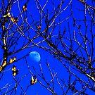 moon on blue by Tim Horton