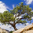 "Angels Landing ""Bonsai"" Tree by Kenneth Keifer"