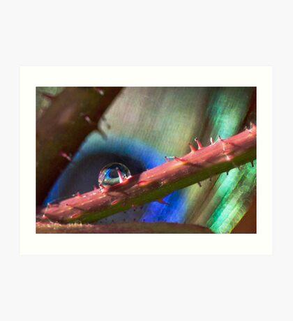 Nature's Eye Art Print