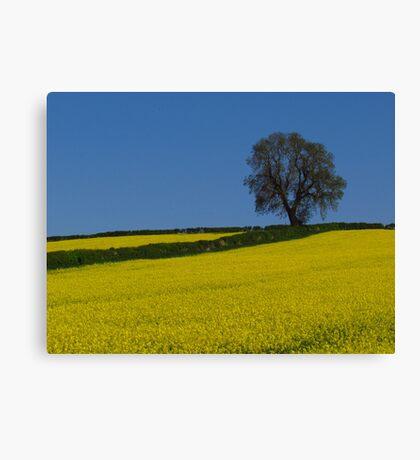 Oak Tree Landscape Canvas Print