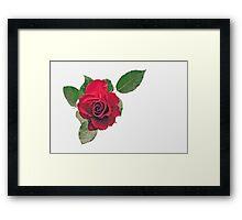Just one rose Framed Print