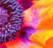 A colorful dream... by Bob Daalder