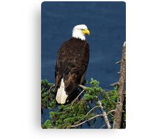 Proud Bald Eagle with White Tail Canvas Print