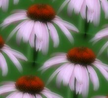 Pink Coneflower by SmilinEyes