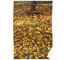 Fallen Leaves 13/06/13 Poster