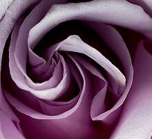 Lavender Swirls by Doug Greenwald