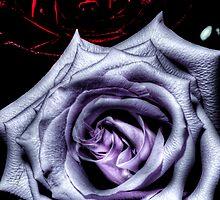 HDR - Dark Rose Pair by Doug Greenwald
