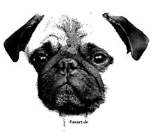 mops puppy white - french bulldog, cute, funny, dog Photographic Print