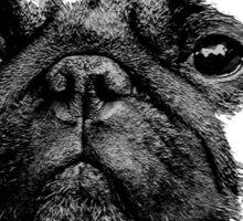 mops puppy white - french bulldog, cute, funny, dog Sticker