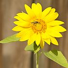Bee on Sunflower by ValeriesGallery