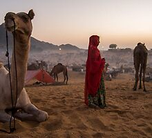 Pushkar camel festival at dusk by Robert Larson