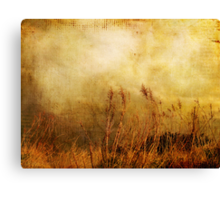 Beach Grasses of Gold... Canvas Print